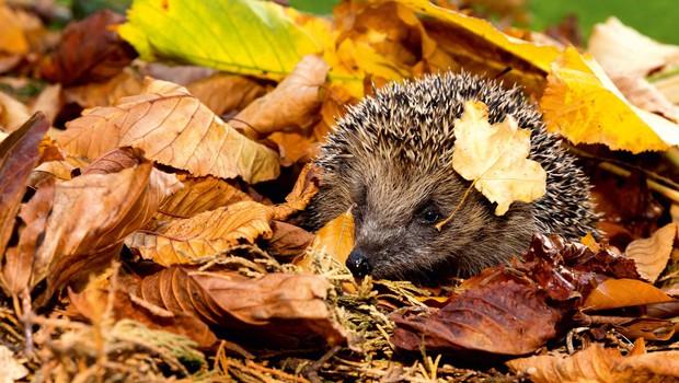 Živali na vašem vrtu - katere so in kaj tam počnejo? (foto: Shutterstock)