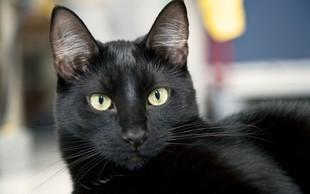 Simbolni pomen črne mačke: Znak zaščite in ustvarjalnosti!
