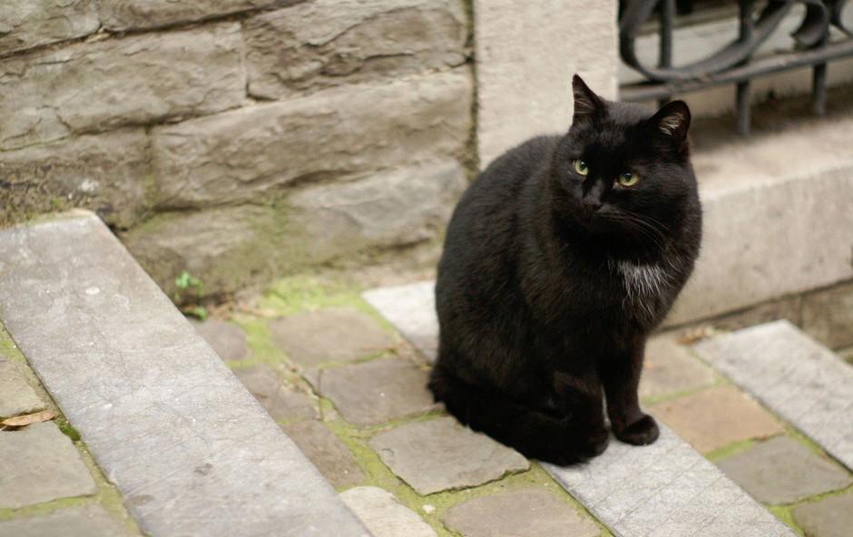 Simbolni pomen črne mačke, ki se pojavi pred vašimi vhodnimi vrati (foto: profimedia)