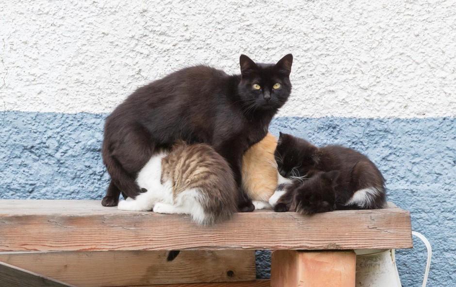 Se obnašate rasistično in verjamete v stereotipe, ko gre za mačke? (foto: profimedia)