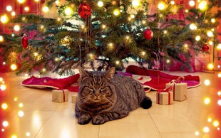 Dobra novica za lastnike mačk: Božična drevesca, ki jim mački ne morejo narediti veliko škode
