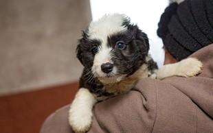 Tudi uprava za varno hrano opozarja na trpljenje živali ob pokanju petard