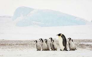 Raziskovalec Colin O'Brady prvi na svetu sam prehodil Antarktiko