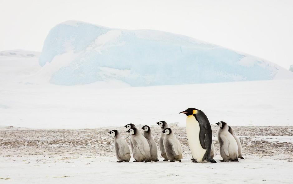 Raziskovalec Colin O'Brady prvi na svetu sam prehodil Antarktiko (foto: profimedia)
