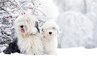 Kako v obdobju zime poskrbeti za pasje ljubljenčke