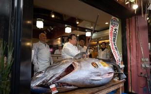 Modroplavutega tuna prodali za rekordnih 2,7 milijona evrov