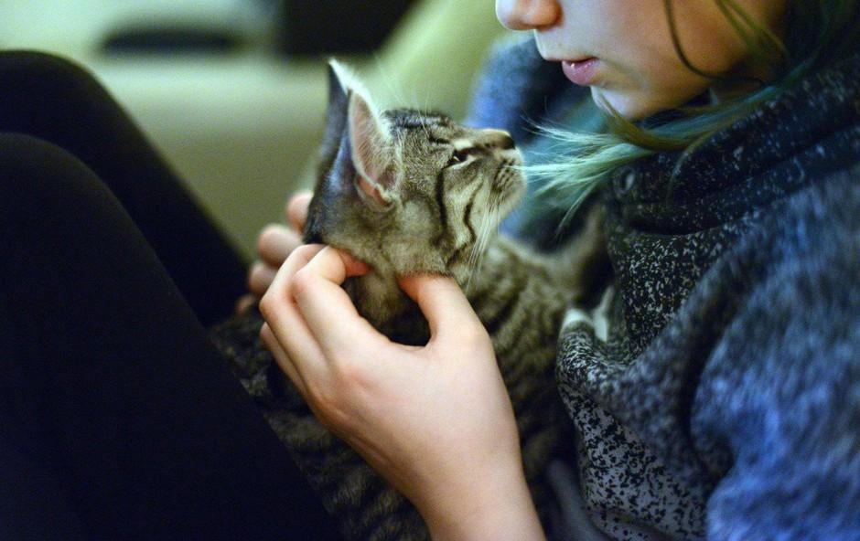Pogrešano mačko našli 1600 kilometrov stran od doma (foto: profimedia)