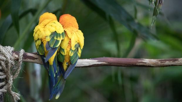Ptičje samice naj bi pri izbiri samcev bolj cenile inteligenco kot lepoto (foto: profimedia)