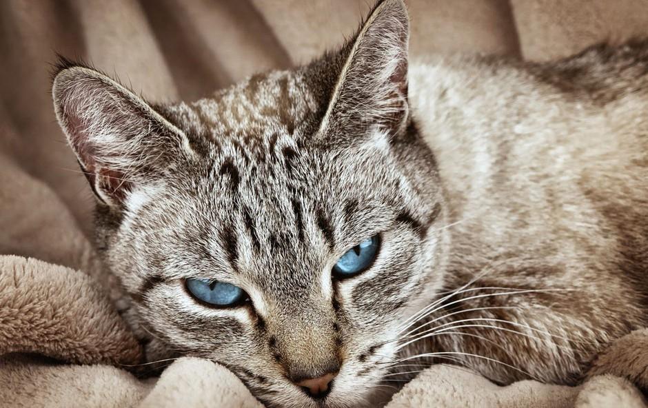 Razlaga sanj: Mačka ima vrsto pomenov, odvisnih od vašega odnosa do živali! (foto: profimedia)