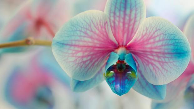Nina Kasandra Klun o kitajskem novem letu in srečnih rastlinah (foto: SHUTTERSTOCK)
