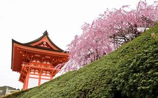 Japonska: V pričakovanju čarobnega cvetenja češenj