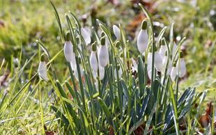 Čeprav je februar, je že pošteno zadišalo po pomladi
