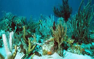 V primeru okoljskih motenj korale okrevajo najmanj 9 let