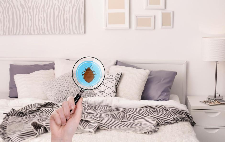 Napovejte boj nepovabljenim insektom! (foto: SHUTTERSTOCK)