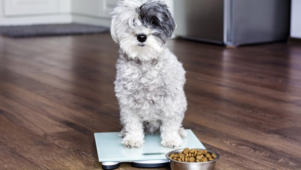 Psi s hrano pridobivajo pomemben vir energije: maščobe oziroma trigliceride (foto: SHUTTERSTOCK)
