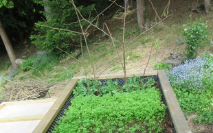 Obilnejši pridelek: Visoke grede