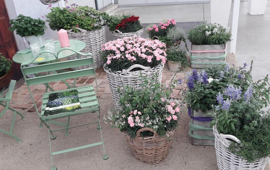 Kombinacija različnih loncev in barv rastlin. (foto: Arhiv Kluba Gaia)