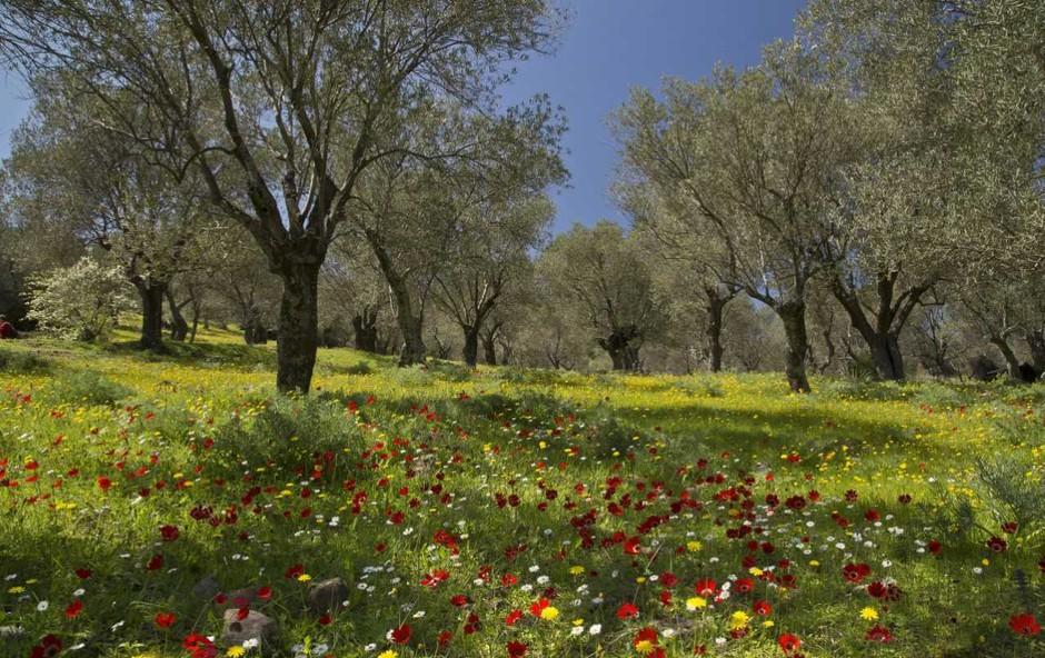 Brez česa posamezna horoskopska znamenja pomladi težko delujejo? Preverite! (foto: Profimedia)