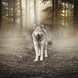 Nina Kasandra Klun: Pomen živali v sanjah