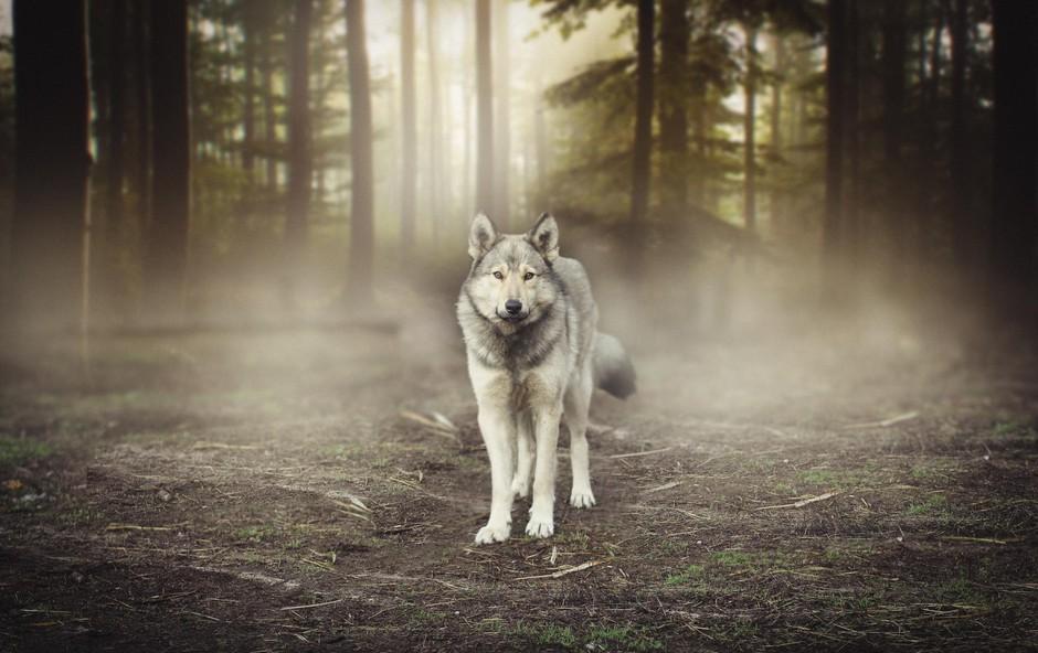 Nina Kasandra Klun: Pomen živali v sanjah (foto: Shutterstock)