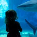 Akvariji: Podvodni svet na dlani (foto: Shutterstock)