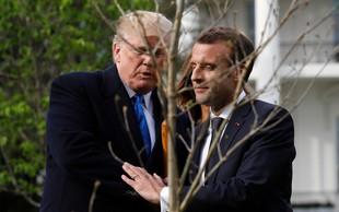 Posušilo se je drevo prijateljstva, ki sta ga posadila Donald Trump in Emmanuel Macron