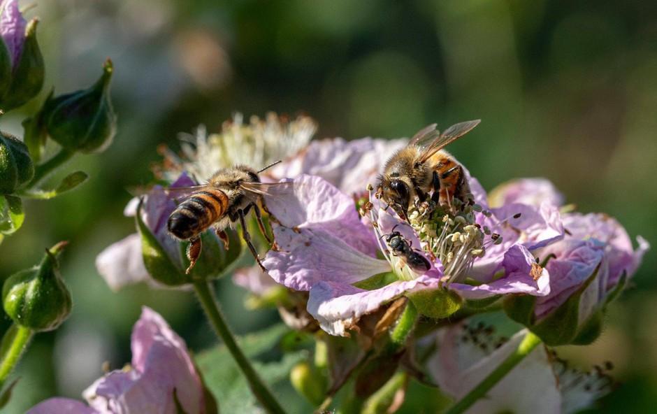 Zaradi prevrnjenega tovornjaka v ZDA pobegnilo 133 milijonov čebel (foto: profimedia)