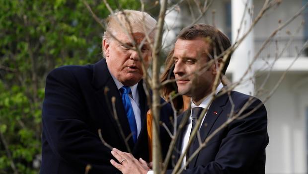 Macron bo Trumpu brez večje drame pač podaril novo drevo (foto: profimedia)