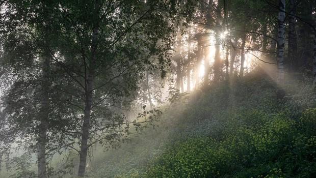 Na Mariborskem Pohorju bodo na najdaljši dan v letu vnovič množično pričakali sončni vzhod (foto: Profimedia)