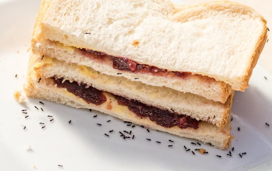 Mravlje v našem domu: Kako jih pregnati? (foto: Shutterstock)
