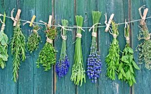Katere rastline nam najbolj pomagajo pri poletnih ritualih?