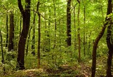4 ekscentrični, a zato nič manj učinkoviti načini zdravljenja z drevesi