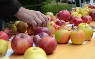 Dunajski Caritas zbira odvečno sadje z vrtov