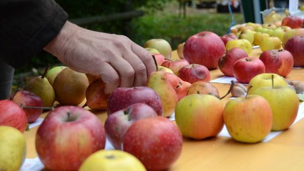 Dunajski Caritas zbira odvečno sadje z vrtov (foto: BPWW / Lemberger)