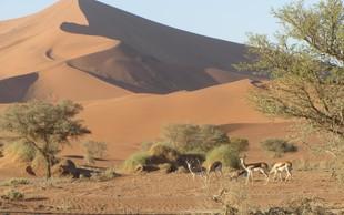 Nepozabna počitniška izkušnja ... vse to in še več je Nambija