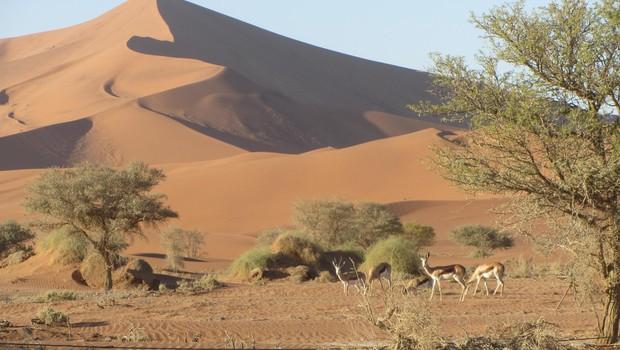 Tudi v puščavi prebivajo številne vrste živali, ki se ne pustijo motiti. (foto: Foto: Osebni Arhiv)