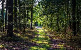 Video povabilo Tinkare Filač k čisto pravi gozdni meditaciji!