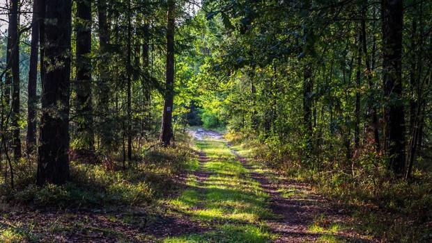 Video povabilo Tinkare Filač k čisto pravi gozdni meditaciji! (foto: profimedia)