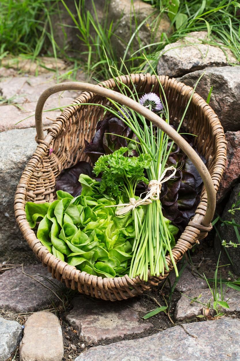 ekološko vrtnarjenje